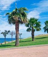 Sardinien Palmen foto