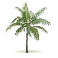 einzelne Palme