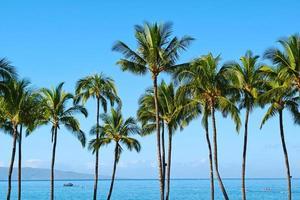 Maui Palmen foto