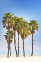 Palmen und blauer Strand
