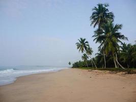 Blick auf den Strand mit Palmen foto