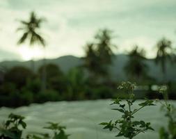 wilde Blume an den Palmen