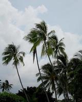 Palmen wiegen sich im Wind, Phuket, Thailand