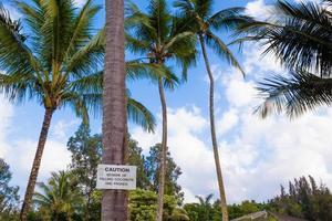 Vorsicht vor fallenden Kokosnusszeichen foto