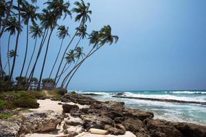 Palmen an der tropischen Küste in Sri Lanka foto
