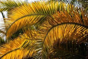 Palmenblätter foto