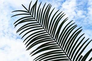 Palmblatt. foto