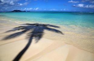 tropischer Schatten