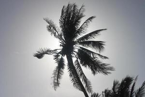 Ansicht von unten auf eine Palme mit dem Sonnenlicht durch