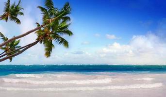 grüne Palmen in der Karibik. foto