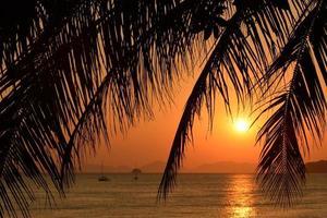 Sonnenuntergang mit Palmblättern. foto