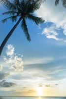 Palmenschattenbild und tropischer Sonnenuntergang