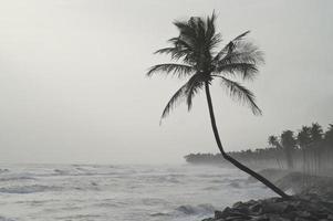 einsame Palme mit Blick auf den Sturm