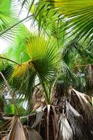 im palmengarten - urwald - palmenblätter - spanien foto