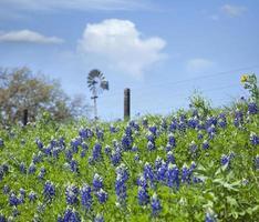 Texas Bluebonnets am Hang mit Windmühle im Hintergrund