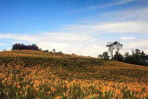 Taglilienblume am sechzig Steinberg im Taiwan Hualien Festival foto