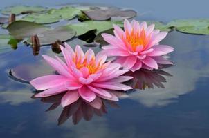 Lotusblumen und blaue Himmelsreflexion im klaren Wasser