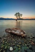 einsamer Baum mit Stein