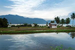 Reisfelder in der Nähe des Sees Maninjau (Danau Maninjau) foto