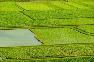 mit Blick auf die Taro-Farmen im Hanalei-Tal, Kauai, Hawaii, USA