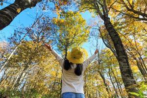 Blick auf den hohen Baum foto