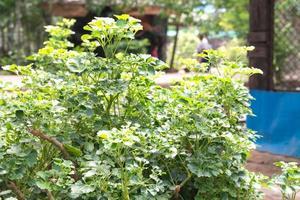 der grüne Baum im Zoo