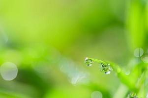 Wassertropfen auf das Gras foto