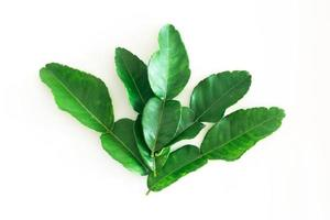frische grüne Kaffirlimettenblätter