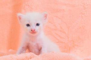 ein süßes weißes Kätzchen auf einem Handtuch