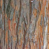 Baumstammrindenbeschaffenheit