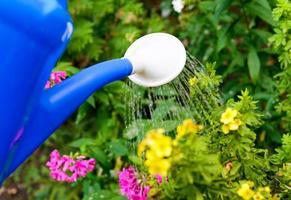 Blumen mit einer Gießkanne gießen
