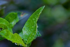 Wassertropfen auf Blätter foto