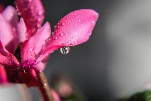 Blumen- und Wassertropfen