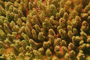 Koralle unter Wasser foto