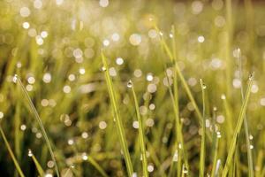 Wassertropfen auf Gras foto