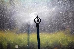 Wasserspritzer vom Sprinkler foto