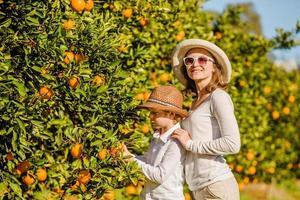lächelnde glückliche Mutter und Sohn ernten Orangenmandarinen bei Zitrusfrüchten