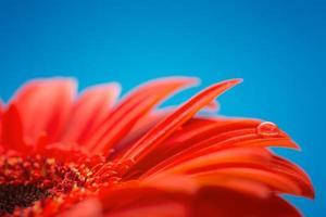 Makrofoto der Blume mit Wassertropfen