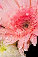 Wassertropfen auf die rosa Blume