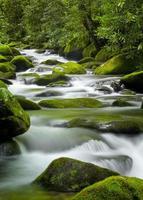 brüllender Gabelbach, Nationalpark der rauchigen Berge foto