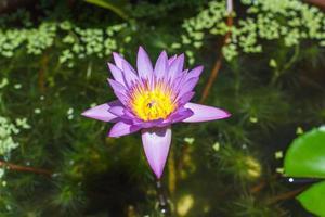 Das sind Wasserblumen als Zuhause