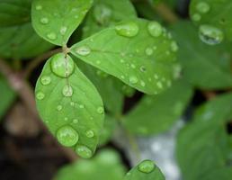 schönes grünes Blatt mit Wassertropfen