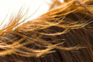 Pferdemähne Textur foto