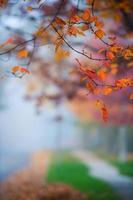 Straße an einem nebligen Herbsttag. foto