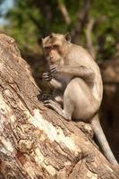 Affe, der auf Baum sitzt. foto
