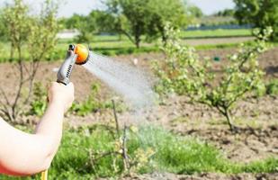 Wasser aus einem Schlauch gießen Gartenblumen