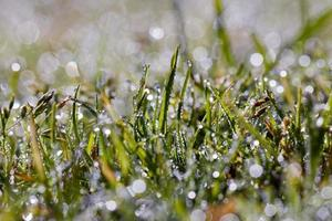 Wassertropfen auf das Gras