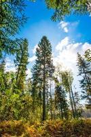 Sonnenstrahlen strömen durch die Bäume