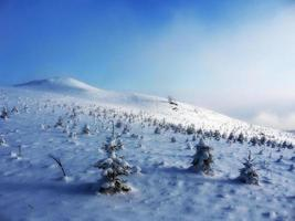 Winterlandschaft bei Sonnenuntergang, kleine Bäume unter dem Schnee