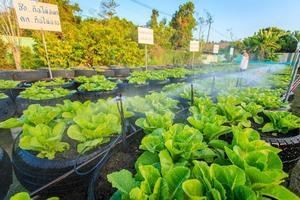 Bewässerungssystem im Bio-Gemüsegarten foto